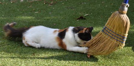 CALLIE AND BROOM RECTANGLE CROP 250