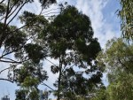 CITY SKYLINE INTRUDES THRU TREES GOOD EXPOSURE59