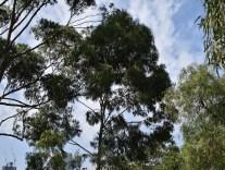 CITY SKYLINE INTRUDES THRU TREES GOOD EXPOSURE 59