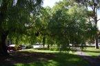 GOOD EXPOSURE UNDER PEPPERCORN TREE PARK 22