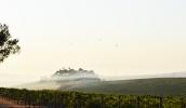 Smokey morning at Balgownie Estate 057