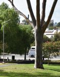 STARK TREE PARK134