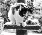 CALLIE_PORTRAIT_SHALOW_CROP_62